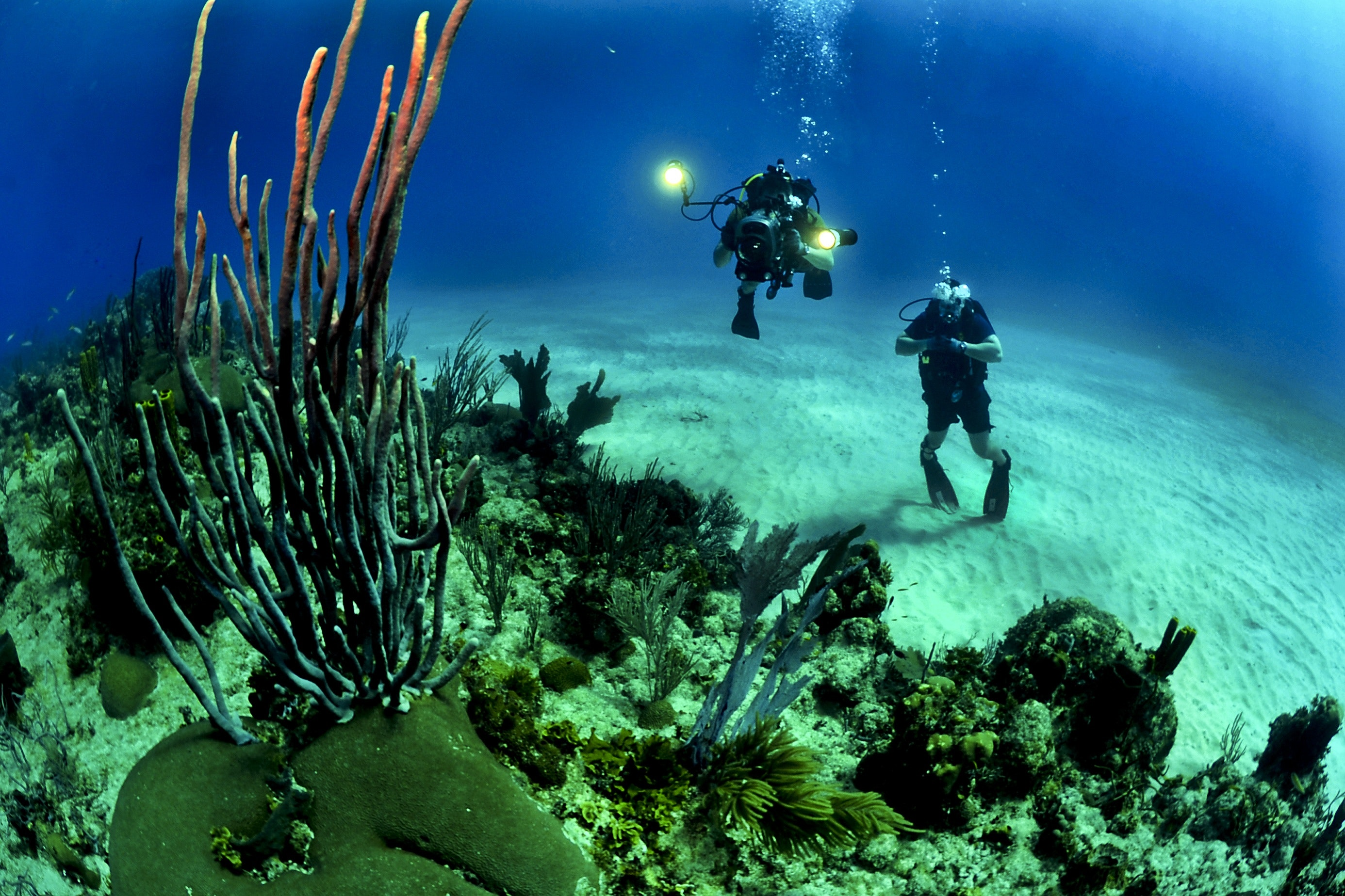 corals-divers-diving-37542