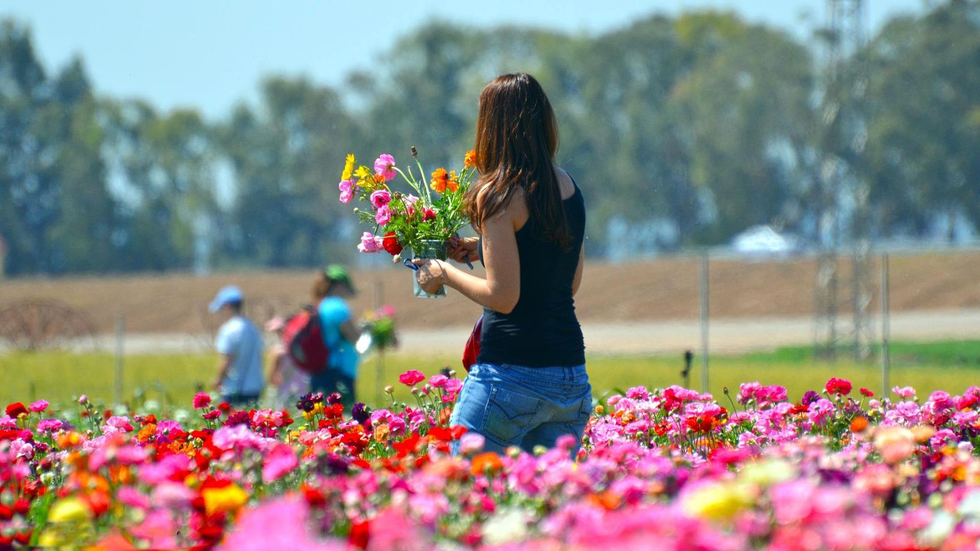 flower-3211800_1920